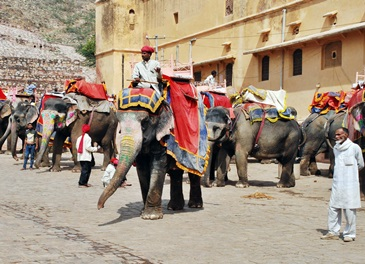 Faszinierendes Indien - Reisen nach Rajasthan