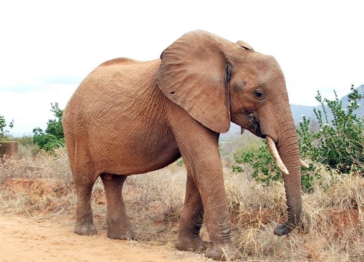 Reisen nach Kenia mit Tierbeobachtungen