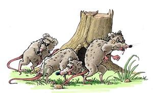 Gefahr droht von der Rattenbande