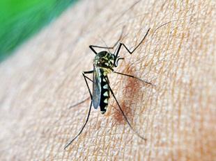 Ausbreitung des Zika-Virus in beliebten Reiseländern